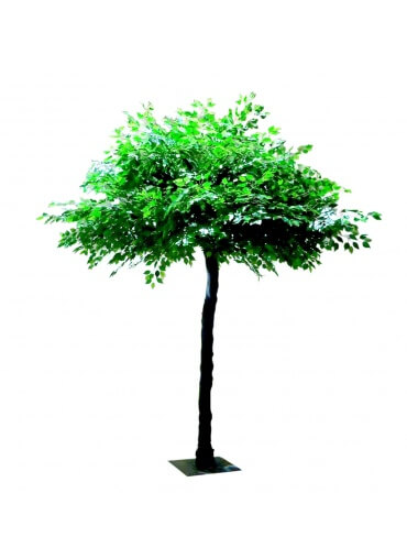 Green Tree for hire 10ft