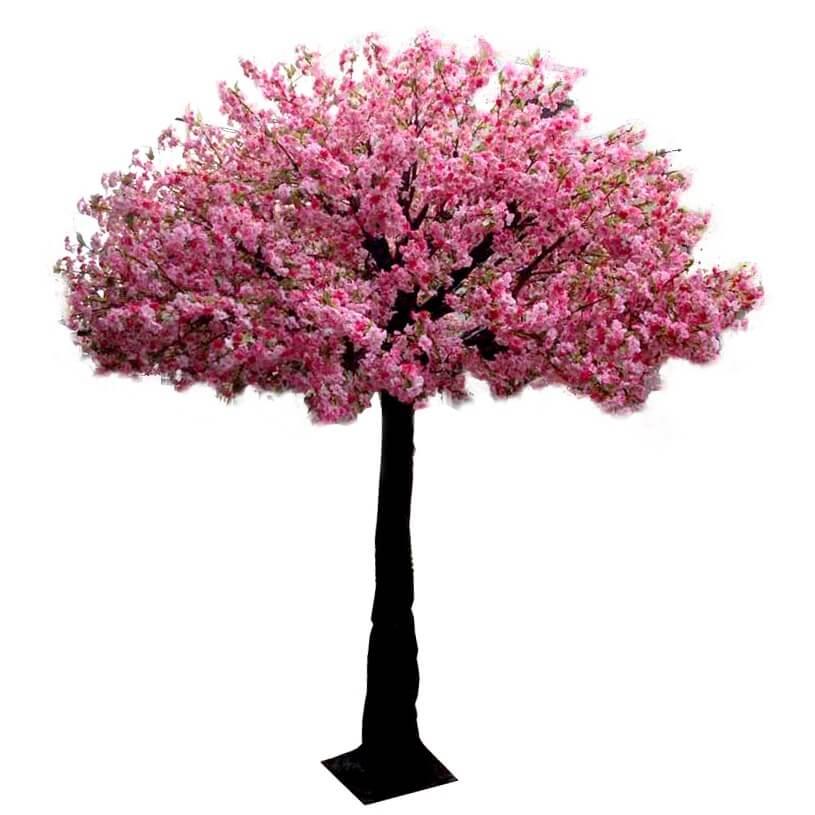 Cherry Blossom Tree Hire