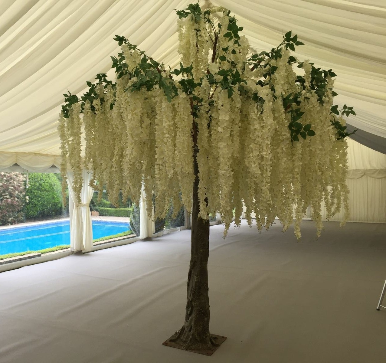 Wisteria tree for hire