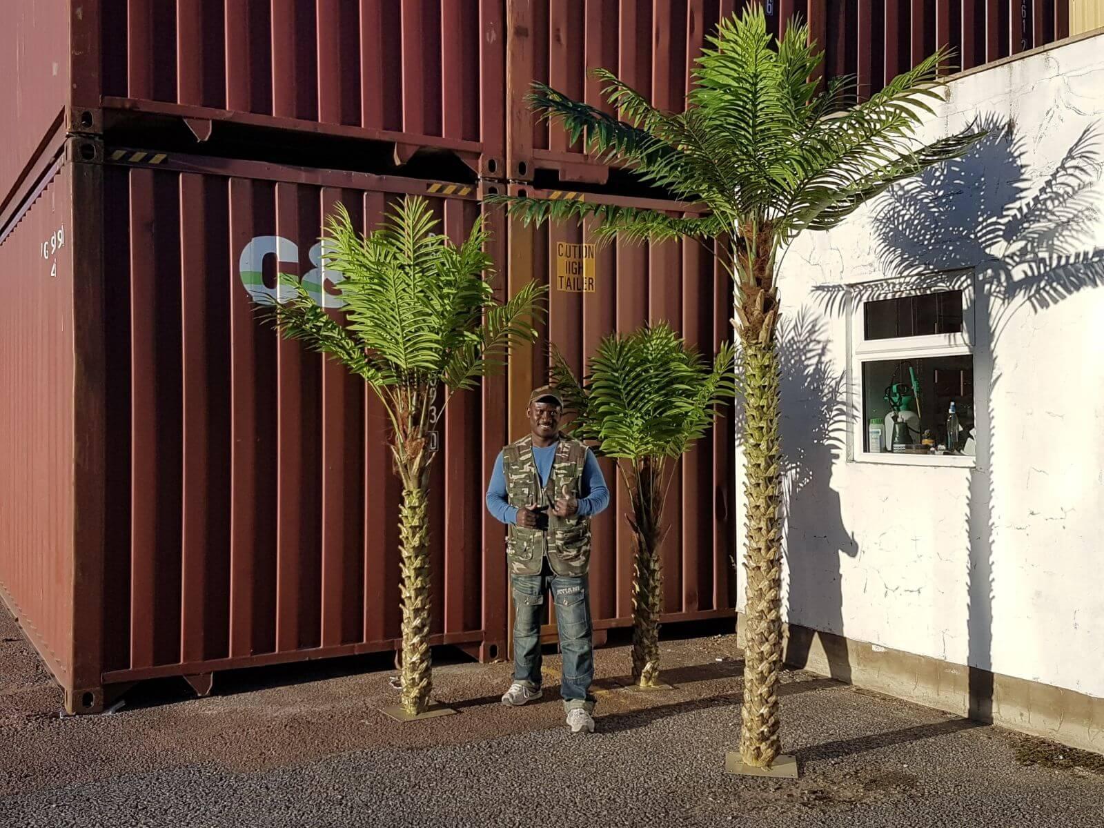 6ft Palm tree